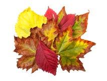 秋天花束 库存图片