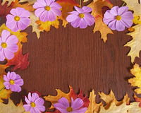 秋天花框架 库存照片
