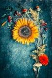 秋天花的布置用向日葵、叶子和canina莓果在土气蓝色背景 库存图片