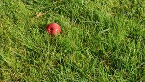 秋天苹果在庭院草跌倒 股票录像
