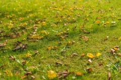 秋天草坪背景 库存照片