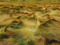 秋天草,黄色,干草巨大的丛林,弯曲由风:风振动植被并且创造异常的形状 库存照片