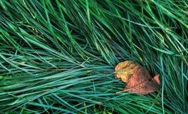 秋天草绿色叶子 库存照片