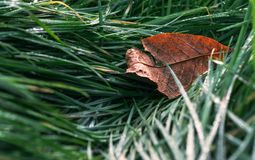 秋天草绿色叶子 库存图片