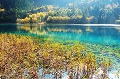 秋天草jiuzhaigou湖山结构树 免版税库存图片