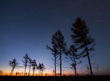 秋天落叶松属在日出的满天星斗的天空下 库存图片