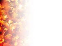 秋天落的叶子。EPS 10 库存图片