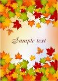 秋天落的叶子 库存例证