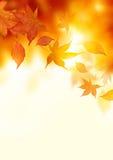 秋天落的叶子 图库摄影