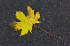 秋天落的叶子 免版税图库摄影