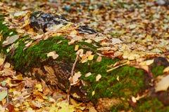 秋天落的叶子 免版税库存照片