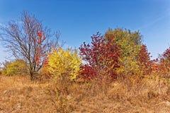 秋天落的树和灌木 免版税图库摄影