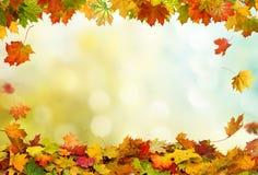 秋天落的槭树离开背景 库存照片