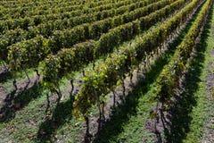 秋天葡萄园全景在瑞士 免版税库存图片