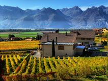 秋天葡萄园全景在瑞士 免版税库存照片