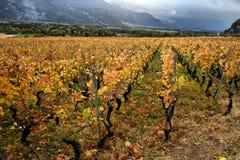 秋天葡萄园全景在瑞士 图库摄影