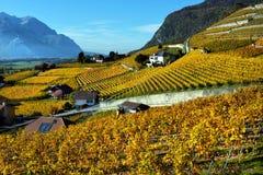 秋天葡萄园全景在瑞士 免版税图库摄影