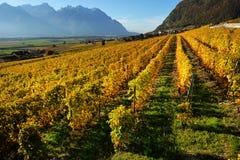 秋天葡萄园全景在瑞士 库存图片