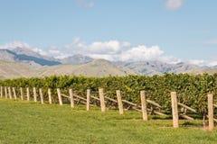 秋天葡萄园在Marlborough地区,新西兰 库存图片