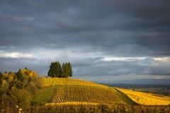 秋天葡萄园, Willamette谷,俄勒冈 库存图片