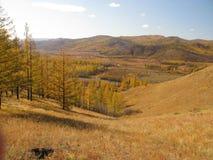 秋天蒙古 免版税图库摄影