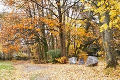 秋天蓝色城市叶子横向天空结构树染黄 Parc阿斯特丽德 库存照片