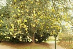 秋天蓝色城市叶子横向天空结构树染黄 Parc de Scherdermael 免版税库存照片