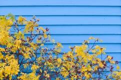 秋天蓝色房屋板壁 免版税图库摄影