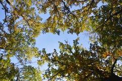 秋天蓝色留下天空 免版税图库摄影