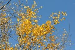 秋天蓝色留下天空 图库摄影