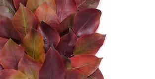 秋天蓝色边界框架陆军少校的肩章天空 充满活力的红色和黄色叶子的构成在白色背景的 平的位置顶视图时髦背景 免版税库存图片