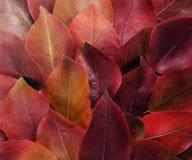 秋天蓝色边界框架陆军少校的肩章天空 充满活力的红色和黄色叶子的构成在白色背景的 平的位置顶视图时髦背景 免版税图库摄影