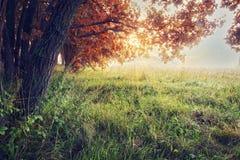 秋天蓝色长的本质遮蔽天空 秋天背景特写镜头上色常春藤叶子橙红 五颜六色的秋天树风景在草甸的 库存照片