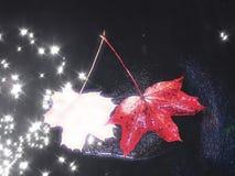 秋天蓝色长的本质遮蔽天空 腐烂的枫叶细节  秋天叶子在水镜子的黑暗的石头说谎 图库摄影