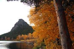 秋天蓝色长的本质遮蔽天空 免版税库存图片