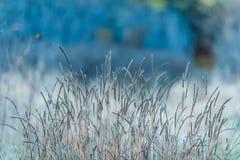 秋天蓝色长的本质遮蔽天空 免版税库存照片