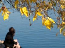 秋天蓝色 库存照片