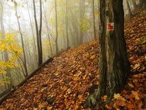 秋天薄雾在事假森林弯曲了山毛榉和槭树与较少叶子在雾下 多雨的日 库存照片