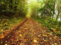 秋天薄雾在事假森林弯曲了山毛榉和槭树与较少叶子在雾下 多雨的日 免版税库存照片