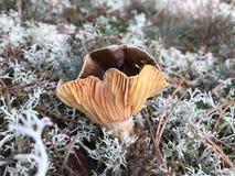 秋天蘑菇在一块沼地增长在森林里 库存照片