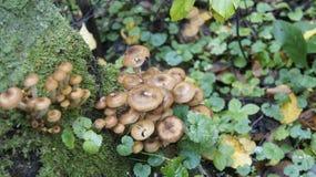 秋天蘑菇在森林里。 库存照片