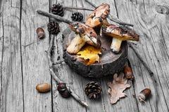 秋天蘑菇收获  库存照片