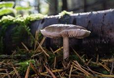 秋天蘑菇 图库摄影
