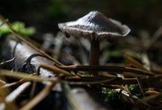 秋天蘑菇 库存照片