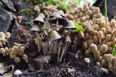 秋天蘑菇 库存图片