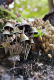 秋天蘑菇 免版税库存图片