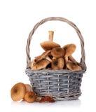 秋天蘑菇 免版税库存照片