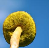 秋天蘑菇 免版税图库摄影