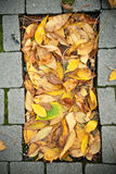 秋天蛋糕 图库摄影