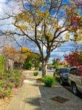 秋天街道在圣何塞市 免版税库存照片